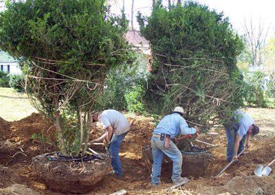 plantings2